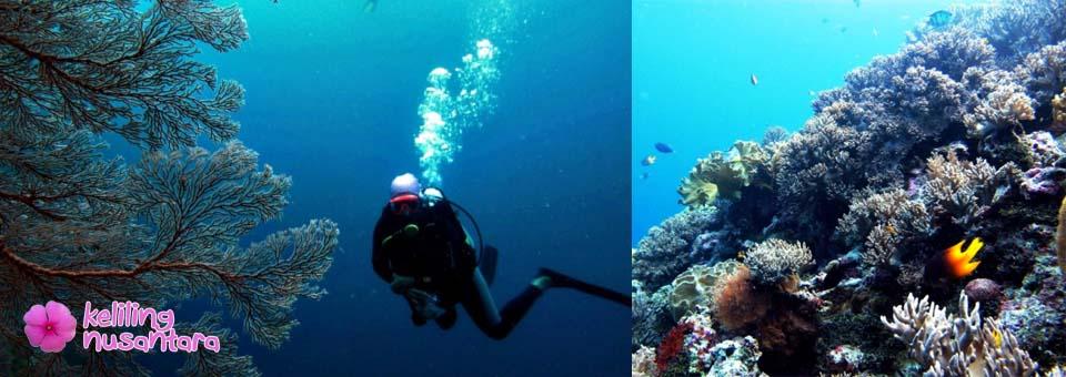 Open Trip Wakatobi 7D6N 02-08 August 2014