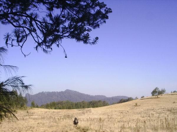gunung argopuro Argopuro