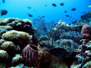 Wakatobi Underwater view 300x225 Diving Trip Wakatobi 6D5D