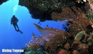 Coral reef Togean islands 300x175 Togean Dive Trip 7D6N