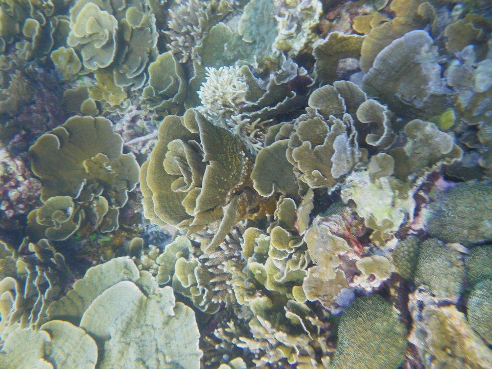 Coral-reef-in-Pari-island