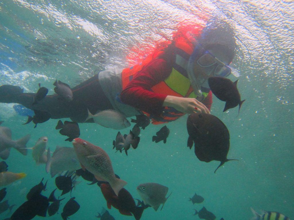 Ikan Karang Pulau Pari