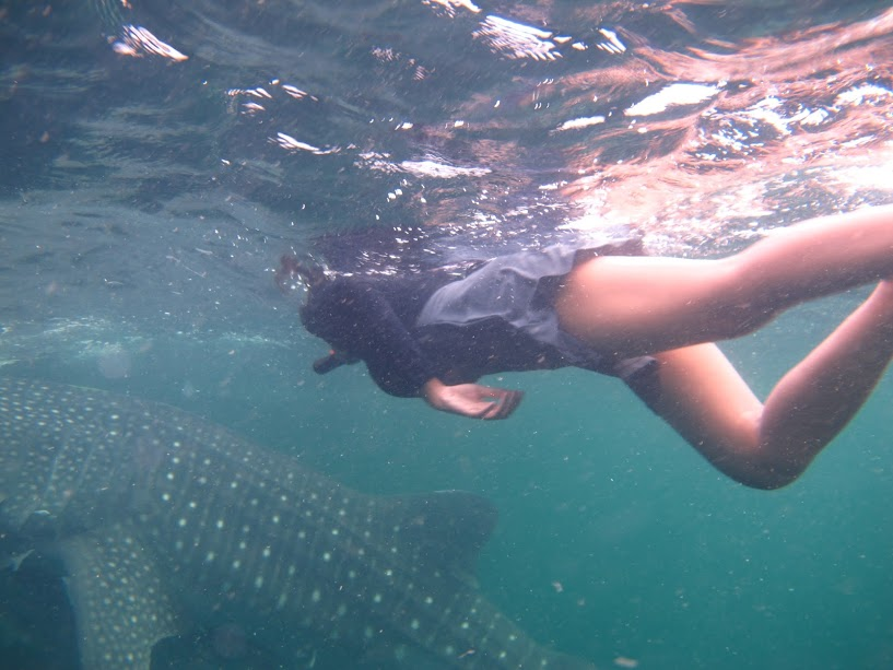 Swimming with Whaleshark