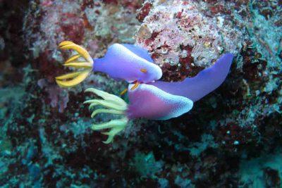 Amazin Coral reef of Wakatobi 400x267 Welcome