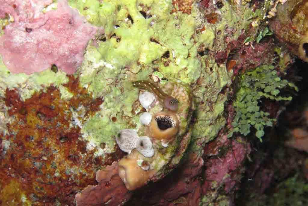 Beautiful coral fishes in Wakatobi