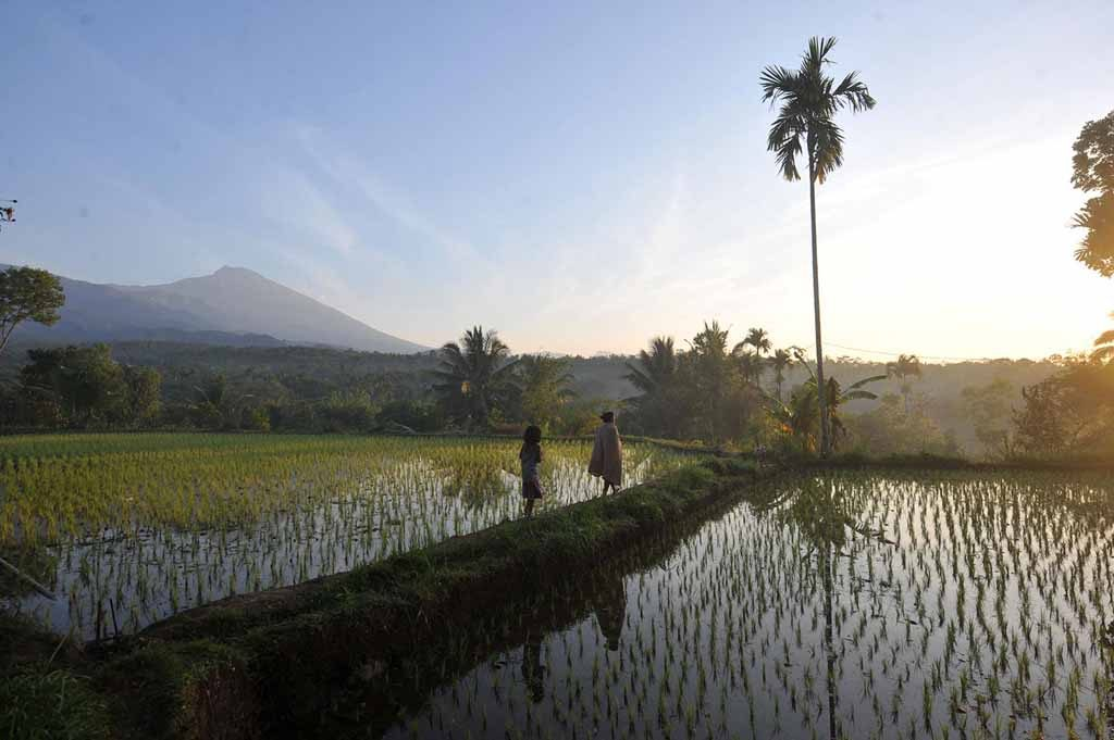 Local peoples around paddyfield in Tetebatu village 1024x681 Discovering the Most Exotic Lombok Island   Indonesia