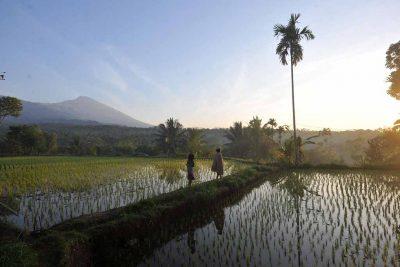 Local peoples around paddyfield in Tetebatu village 400x267 Welcome