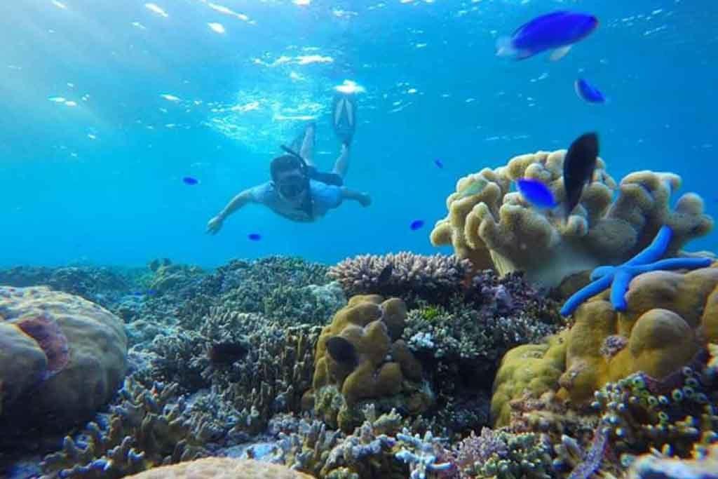 Snorkeling di perairan Wakatobi