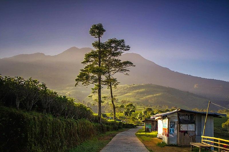 Kemuning tea plantation - Karanganyar