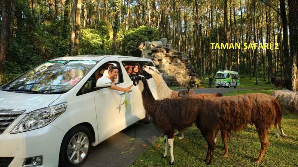Feedin animal in Safari Park Prigen