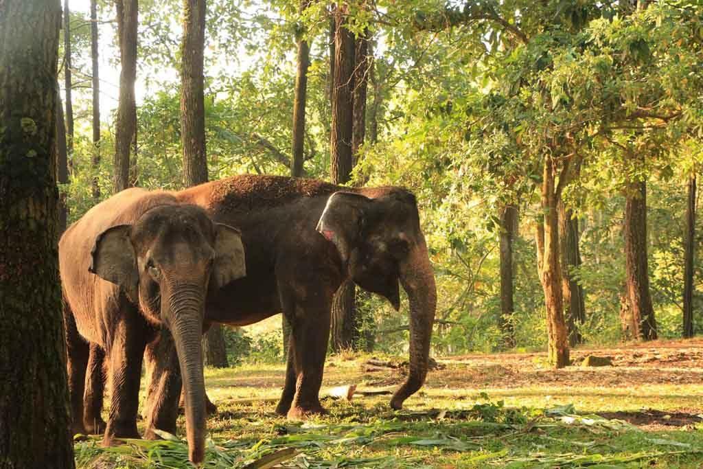Gajah di Taman Safari Prigen