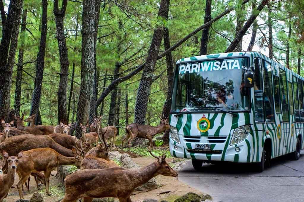 Jelajah Taman safari Prigren