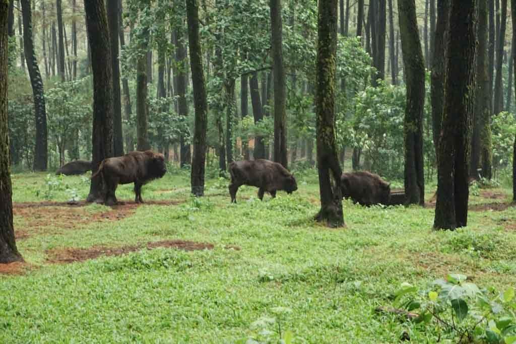 Koleksi hewan Taman safari Prigen